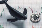 Почему «киты» не перестают скупать биткоин?